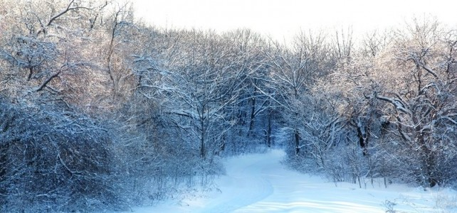 3494704-country-road-in-the-snow-winter-forest
